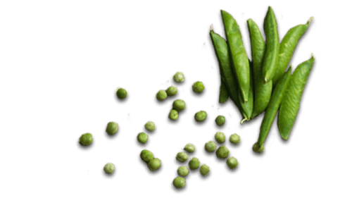 Pea Orzo